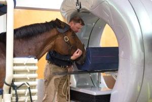 Escaner equino